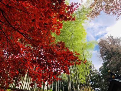 紅葉が見ごろの仙台・松島旅<GO TO トラベル>