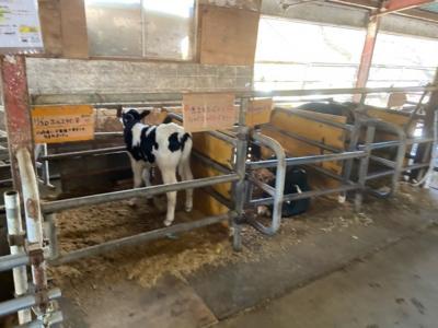 埼玉・榎本牧場のジェラートと牛たち2020
