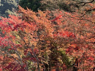 紅葉狩りin京都2泊3日
