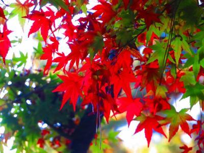 2020 まだ早かった都内紅葉穴場スポット 東京都庭園美術館