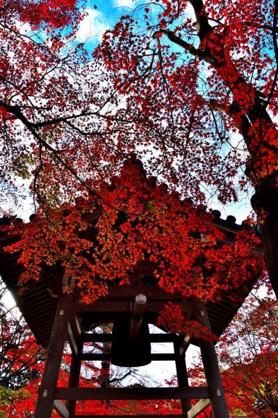 """今年もやってきた紅葉、もみじが素敵で静かな嵯峨野の """"常寂光寺""""へ 朝一で行ったが、9時開園でもすげえ~人に圧倒され満足な撮影が出きなかった"""