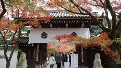 暮秋の京都で紅葉の見どころをめぐる旅。