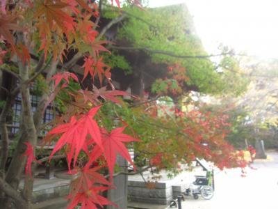 紅葉真っ盛りの九品仏から自由が丘界隈をぶらぶらしました
