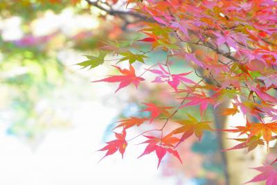 紅葉と素敵なイルミネーション