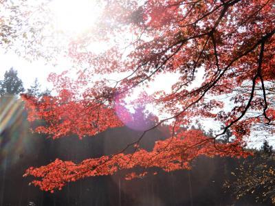 埼玉の紅葉 穴場スポットで 静かに No Mitsu 秋の色を楽しむ そして平和を願う