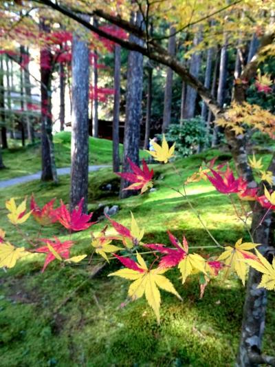 【小松・能美】最高の紅葉とあたたかい北陸の人々