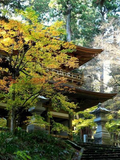 大雄山最乗寺の紅葉 2020