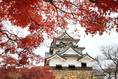 彦根城と玄宮園 紅葉をもとめて