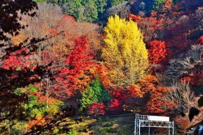 2020紅葉 豊田の奥座敷いなぶ大井平公園の紅葉(9)