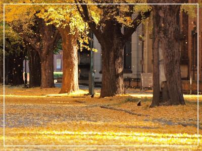 ご近所もなかなかいいものです☆^▽^☆/根津神社と東大キャンパス界隈で「もみじ狩り」