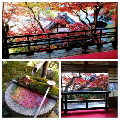 紅葉と花手水の秋景色を楽しみに柳谷観音楊谷寺へ 2020