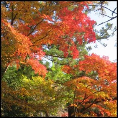 まだまだ間に合う紅葉狩り、片品温泉へ。