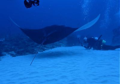 秋 石垣島ダイビング「小浜島 ヨナラ水道」ドリフトでマンタ遭遇