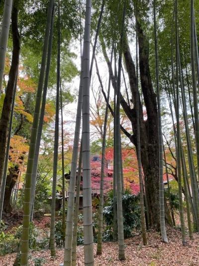 GoToで行く修善寺温泉で、おいしいビールを飲みたいたび