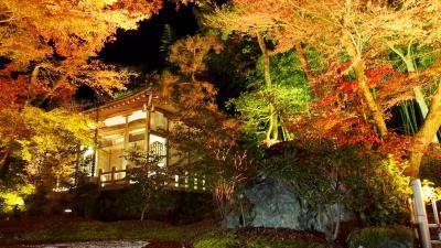メインは、宝厳院ライトアップ~!GO TO!京都・奈良 紅葉狩り2週目(前半)