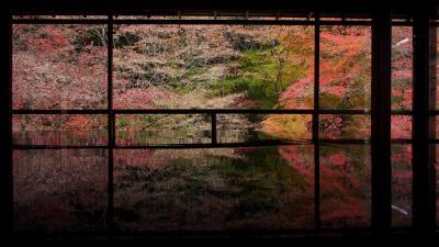 メインは、瑠璃光院~! GO TO!京都 紅葉狩り2週目(後半)