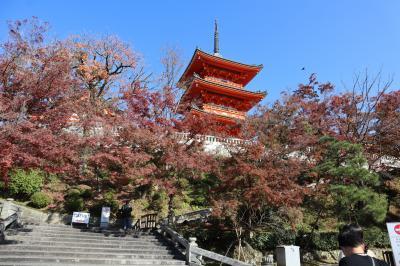 GOTOトラベル京都の旅・・紅葉が美しい「清水の舞台」と「音羽の滝」を散策します。