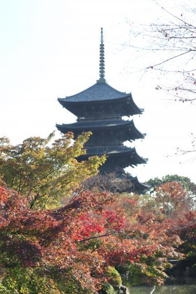 GOTOトラベル京都の旅・・弘法大師空海の真言密教の世界を、紅葉の綺麗な東寺に訪ねます。