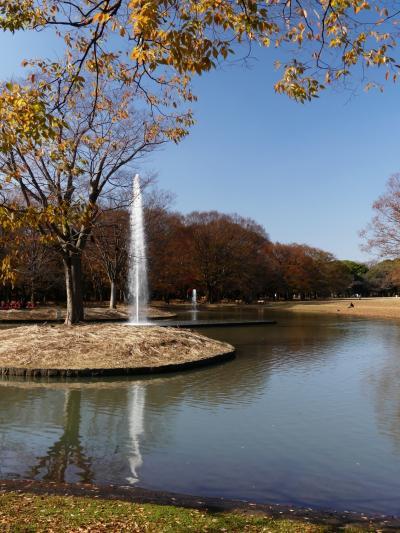 「代々木公園」の紅葉_2020_一部色付いているが紅葉は僅か、黄葉は落葉中だが綺麗(渋谷区代々木)