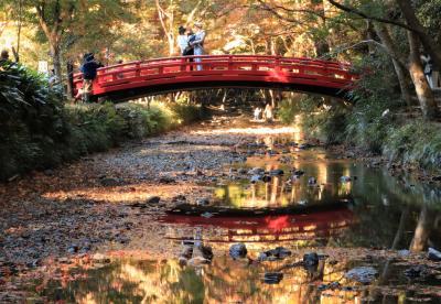 紅葉もいよいよフィナーレに♪ 早朝の香嵐渓&遠江国一宮小國神社の紅葉♪