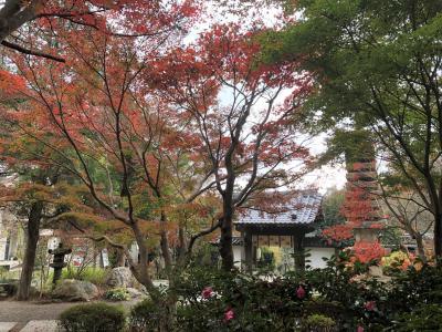 鎌倉、もみじ散策