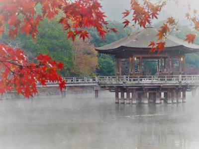 晩秋の奈良公園、ひとり旅