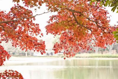 Japan 秋のなごりの昭和記念公園 2020 ~ミツバチばあやの冒険~