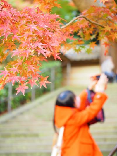 鎌倉 一条恵観山荘の花手水と円覚寺紅葉