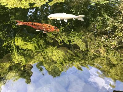 箱根・奥湯河原のほっこり親子旅3泊4日☆奥湯河原【海石榴】朝のファンタジーを楽しんで♪ 帰宅。