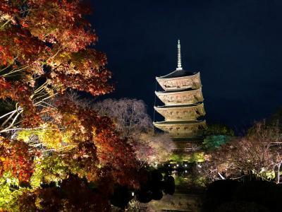 京都『東寺』紅葉ライトアップ★月夜に映える国宝「五重塔」と紅葉を愛でながら約1200年前の平安京の秋に思いを馳せて♪国宝「金堂」&「講堂」