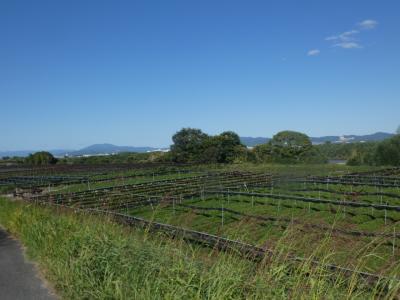八幡 木津川CR 流れ橋上流(Kizugawa Cycling Road Yawata Upper Part, Kyoto, JP)