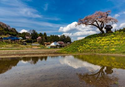 相馬/いわきぐるり旅【1】~田畑の中の一本桜~小沢の桜&永泉寺の桜