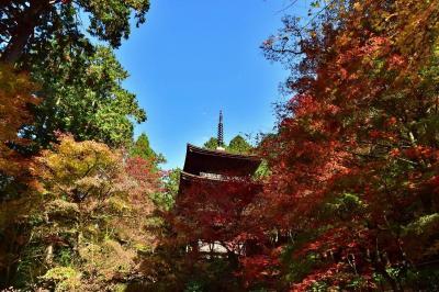2020紅葉 ゆく秋を惜しみながら、秋色の金剛輪寺(13)