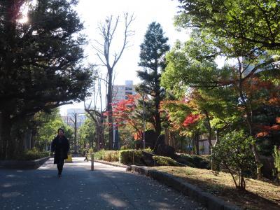 秋の【教育のもり】を散策