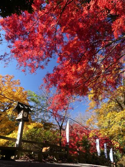 「唐沢山城跡」の紅葉_2020(2)_枯れ始めていて、落葉進行中でした(栃木県・佐野市)