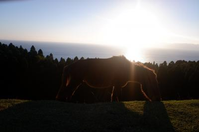 日南海岸の旅