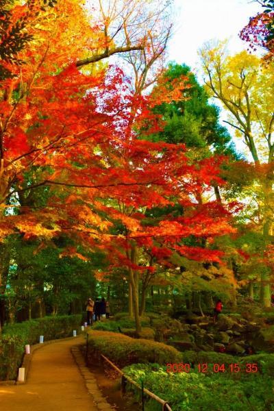 2020 都内紅葉穴場 大田黒公園紅葉とライトアップ -①黄昏~夕方の紅葉-