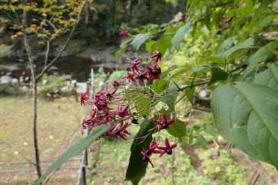 秋の伊豆旅♪ Vol.48 ☆湯ヶ島温泉:美しい秋の湯道めぐり♪