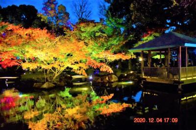 2020 都内紅葉穴場 大田黒公園紅葉とライトアップ -②夜間ライトアップ-