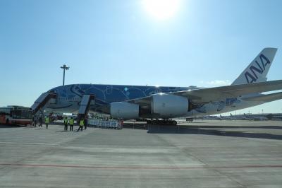 A380フライングホヌで行くハワイ…じゃなく遊覧飛行の旅