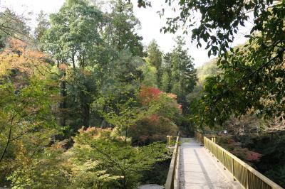 秋の伊豆旅♪ Vol.49 ☆湯ヶ島温泉:美しい秋の湯道めぐり♪