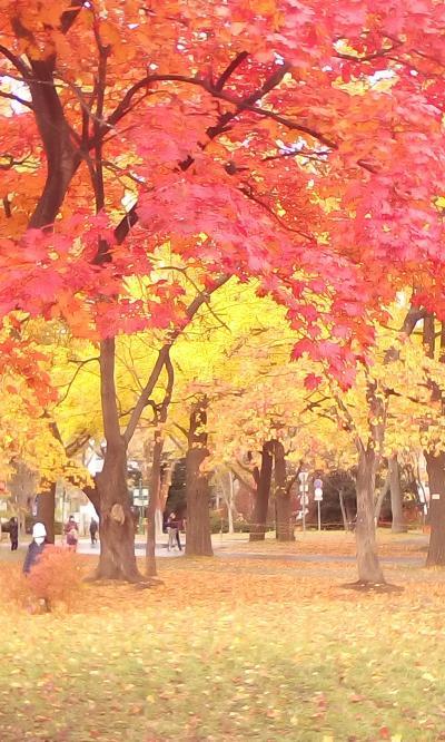 札幌へ紅葉を奏でに♪赤い蔦を追いかけて~「縁切り」とはなんぞや