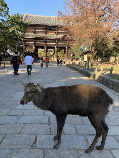 寺子(御朱印)&鉄子(鉄印)が行く日帰り奈良京都