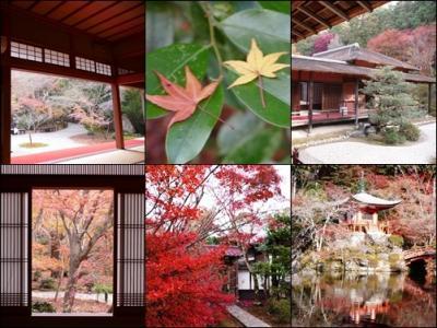 京都の美しき黄葉・紅葉を愛でる