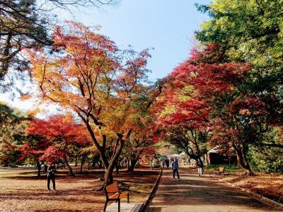 明治神宮 新宿御苑 紅葉散歩 ランチは地中海、アフリカ料理ひつじやで