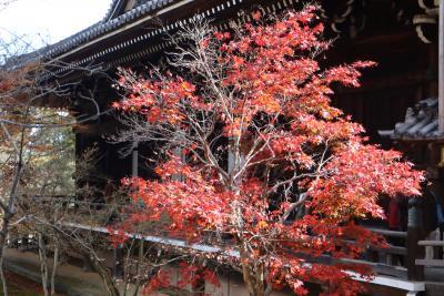 京の紅葉、光明寺、乙訓寺、長岡天満宮を巡る。