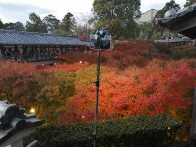 '20 京都・奈良・兵庫 紅葉&100名城旅9 京都 しずやKYOTO宿泊&東福寺紅葉ライトアップ