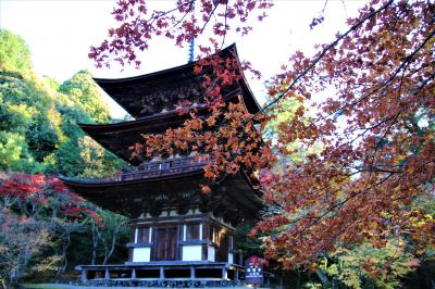 紅葉の天台宗湖東三山最後は龍應山西明寺とライトアップされた彦根城