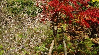 GoToトラベルで京都へ(05) 保津川下り その2。