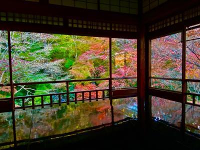 魅惑の瑠璃光院 -秋の特別公開-「GoTo 悠久の浪漫旅 : 4」